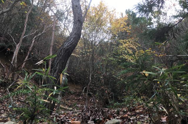 猟場の風景