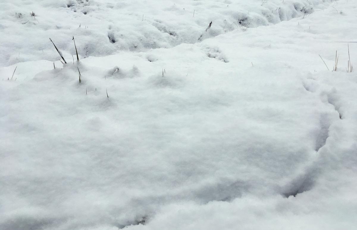 雪に残された獣の足跡