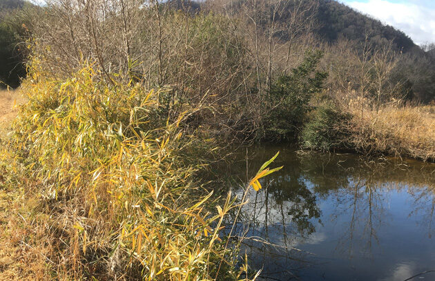 カモが隠れる場所がある池
