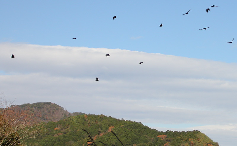 猟場で見かけたカラスの群れ