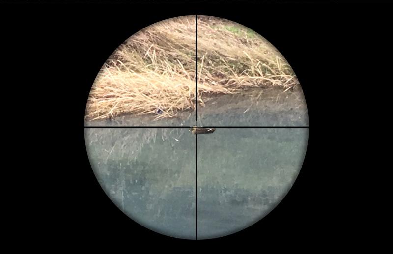 シャープ純正スコープ(4x32)で見た45m先のカルガモ