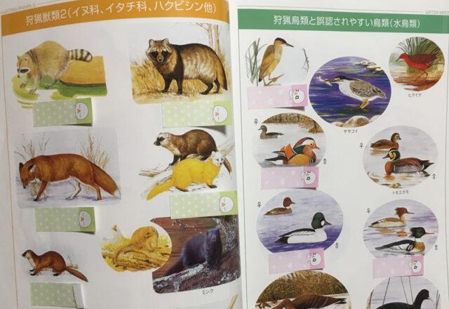 『狩猟読本』鳥獣判別