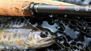 「渓流魚、ルアーで釣るか? 毛鉤で釣るか?」サムネイル