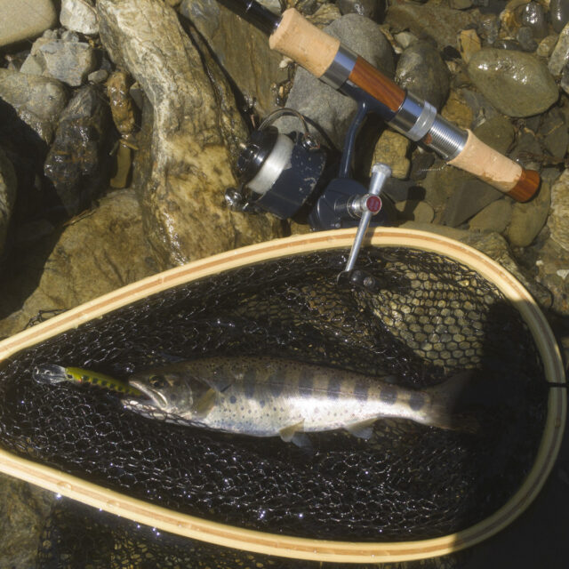 ミッチェル408とシャッドで釣ったアマゴ