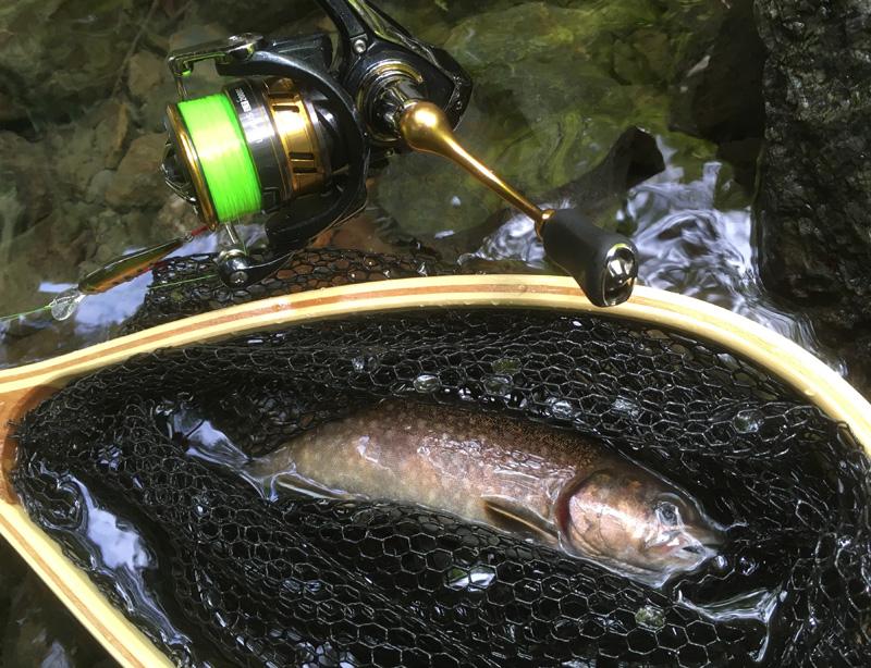 鱒レンジャーで釣ったイワナ