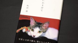 「猫にかまけて」サムネイル